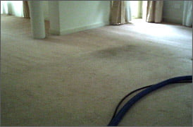 Carpet Cleaning Before